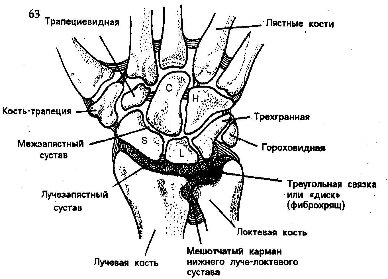 суставы кисти схема