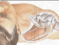 Strengthening The Rotator Cuff